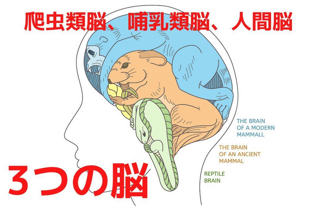 爬虫類脳、哺乳類脳、人間脳の3つの脳
