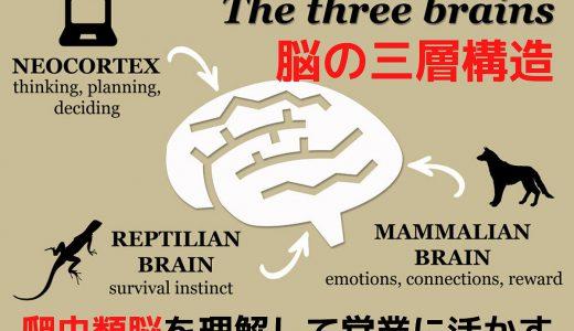爬虫類脳を理解して営業活用【脳の三層構造】哺乳類脳・人間脳とは?