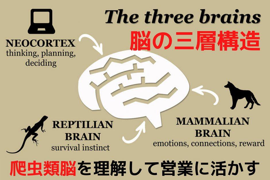 脳の三層構造、爬虫類脳を理解して営業に活かす